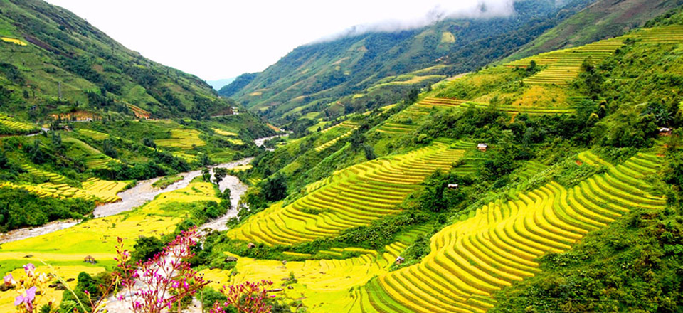 slider-Rice-Field-in-Sapa